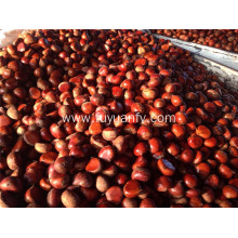 2019 Dandong big sized fresh chestnut